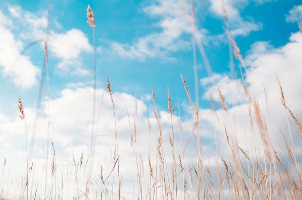 Hold din ERP-løsning i luften – også når den er oppe i skyen