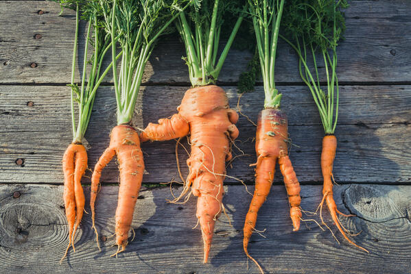 How to capitalize on food waste with ColumbusFood