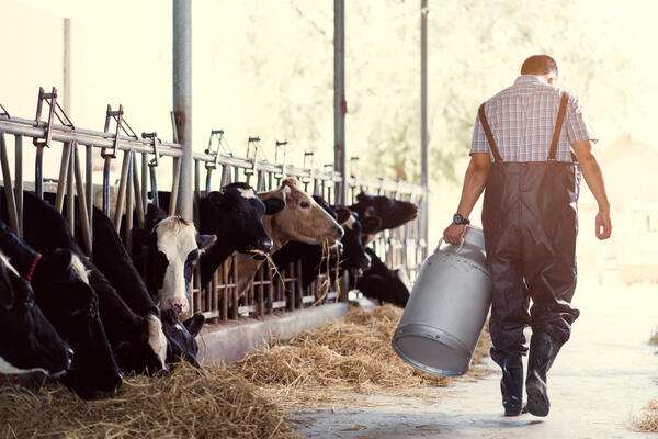 How dual units of measurement can help a dairy producer