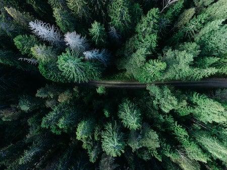Vad innebär VIOL 3? Biometria om systemskiftet som förnyar hela Sveriges skogsindustri.