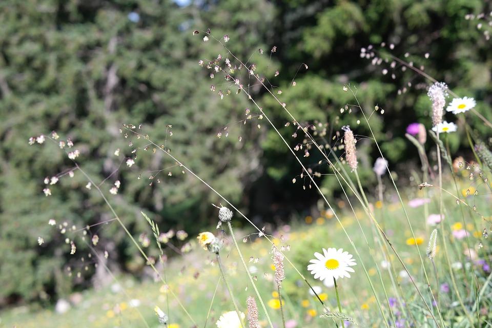Principales enfermedades que se asocian con la primavera - Featured Image