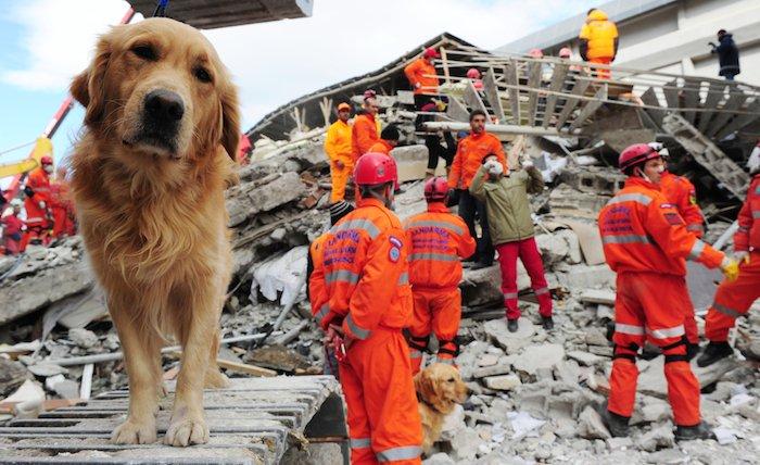 Cómo ayudar a los afectados por el sismo