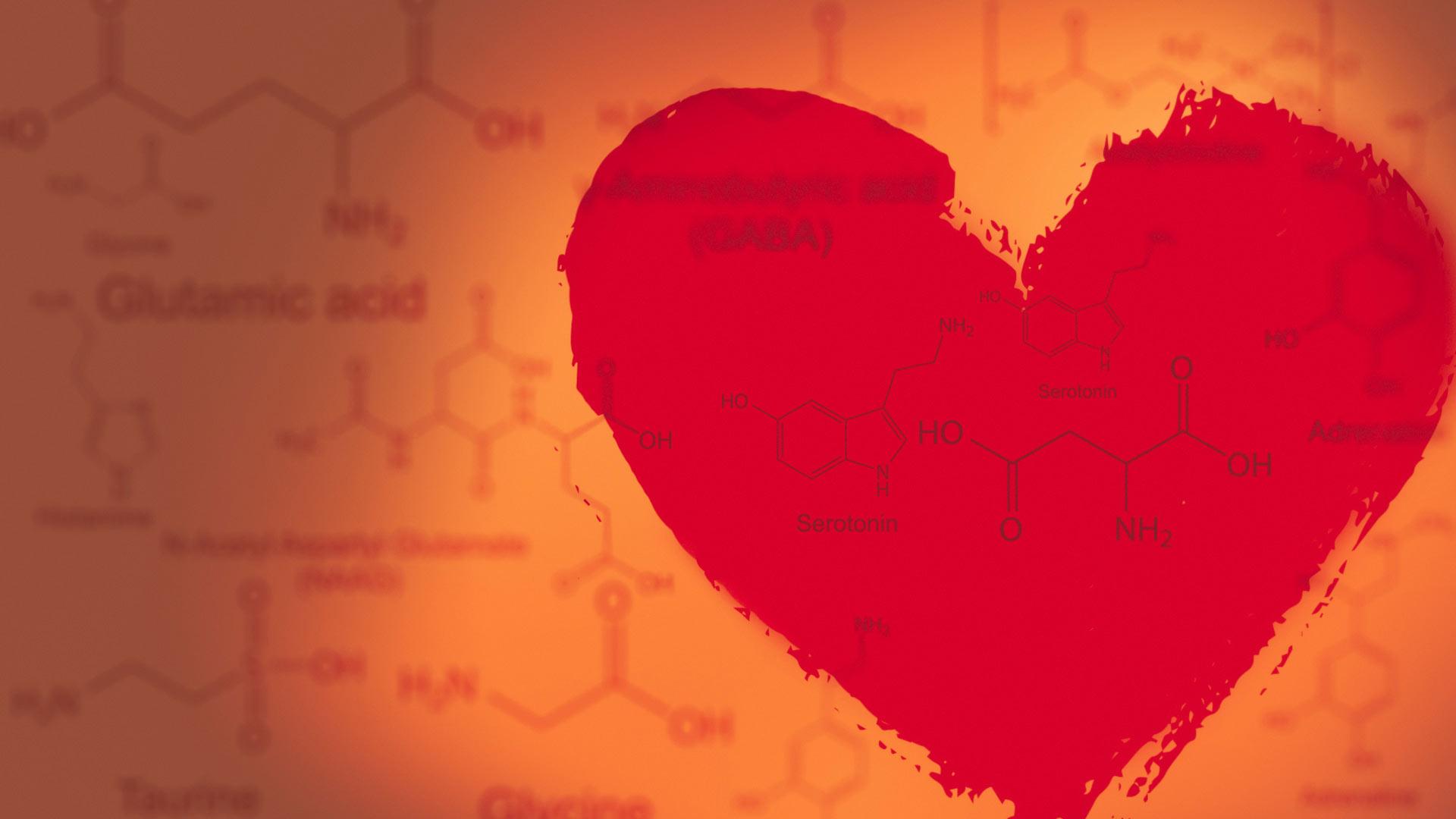 Descubre todo lo que hay detrás de la química en el amor