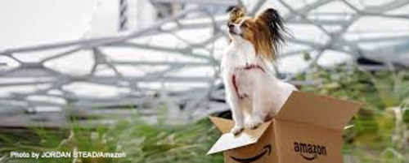 smalldogbox-1