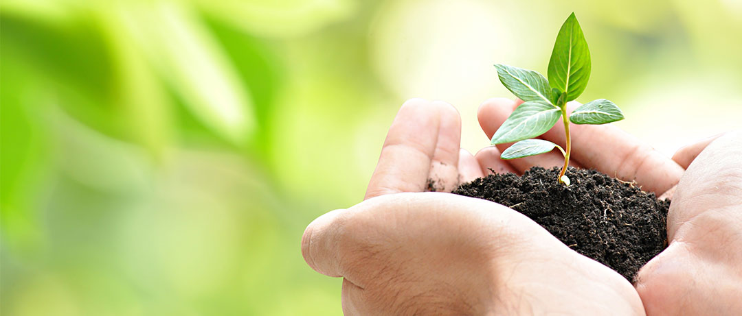 Does Growing A Company Organically Minimize Growing Pains?