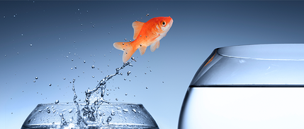 How Can You Differentiate Yourself In A Competitive Market?