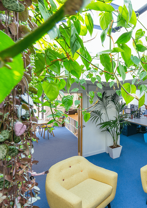 Märraum Architects_Penryn_Warehouse_Studio J jungle