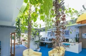 Märraum Architects_Penryn_Warehouse_Studio J plants
