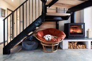 Märraum Architects_Chapel Porth_Full House renovation_Dog 1 Crop