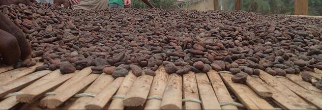 Gen10 and Intertek collaborate on Cocoa Sustainability in Africa