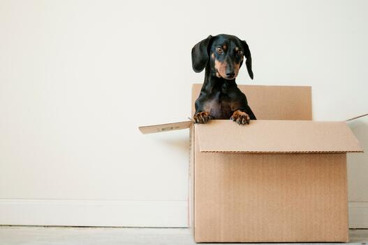 Brown cardboard box on the right of the page with a black dachshund puppy poking out from inside.