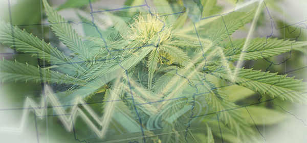 Midwest Marijuana-Industry-Growth hubspot-4