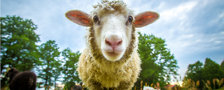 Simplify and Accelerate your Animal Disease Traceability Processes through Digital Transformation