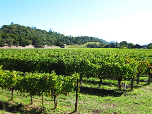 vineyard-ORIG