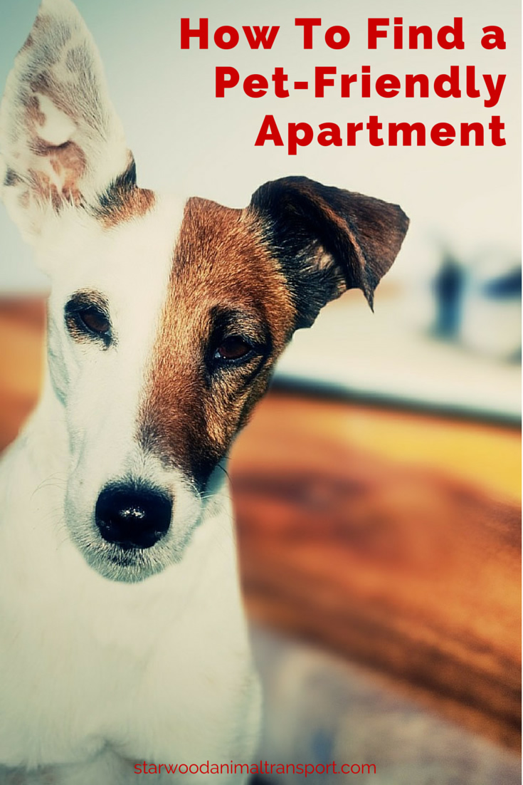 Moving A Pet  Tips For Finding A Pet Friendly Apartment Http://