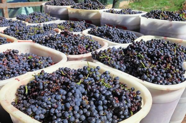 Grape_Tourissimo_Wine_Club