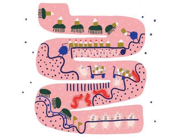 gut-health-gut-illustration-