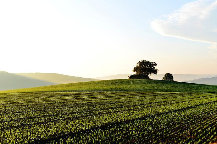 How Land Conservation Easements Can Save High-Income Earners Thousands in Taxes