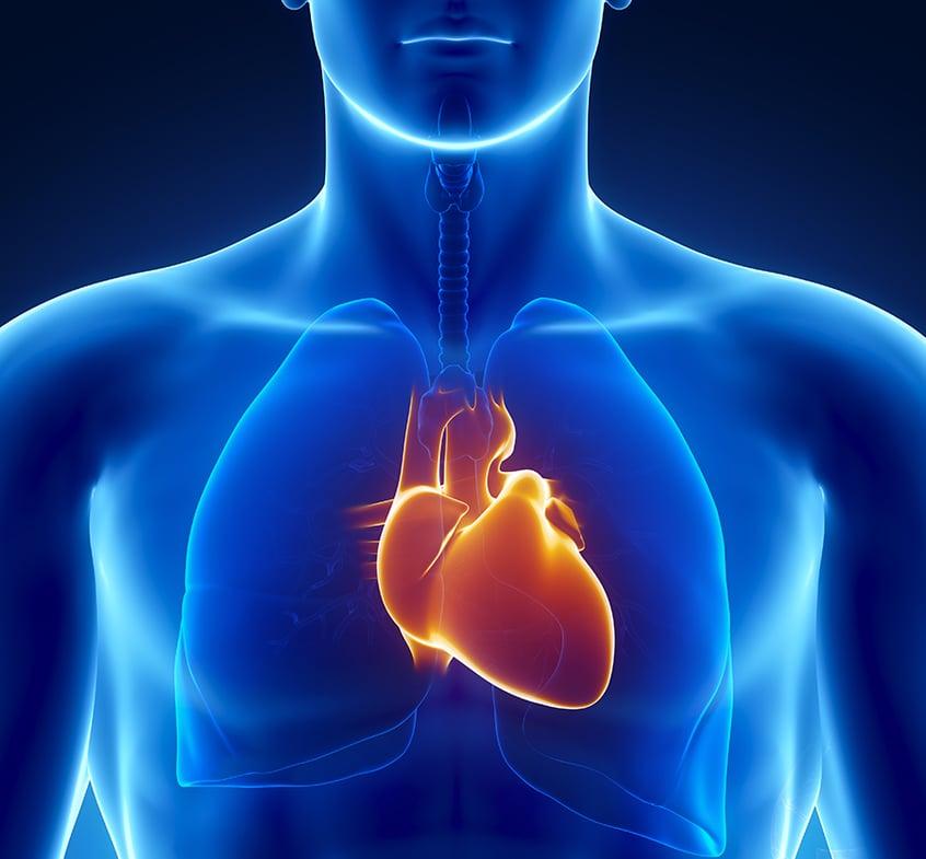 Anomalies du rythme cardiaque: l'entreprise américaine Abbott, l'IHU Liryc et la SATT Aquitaine développent un logiciel pour faciliter les traitements par ablation.
