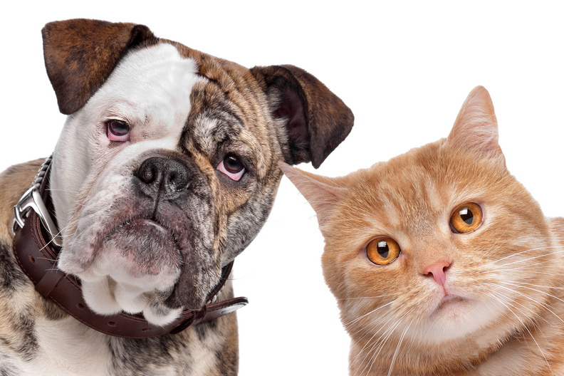 Are Dogs Or Cats Stronger