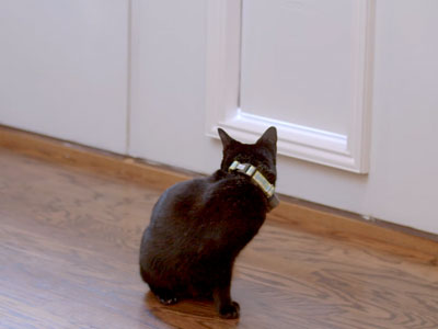 Cat Sitting Next to Dog Door Owners Keep Cat From Using the Dog Door