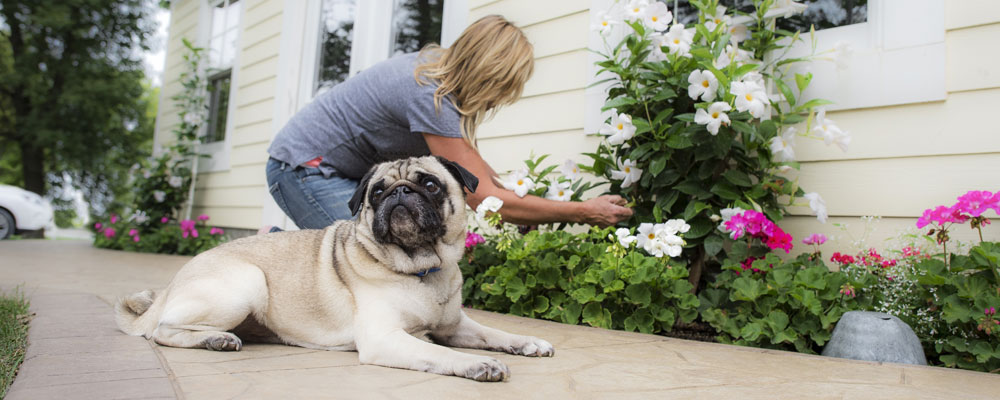 Looking to protect your garden and your dog? Invisible Fence® Brand has created the perfect guide on how to keep your dog from digging in your flower bed!