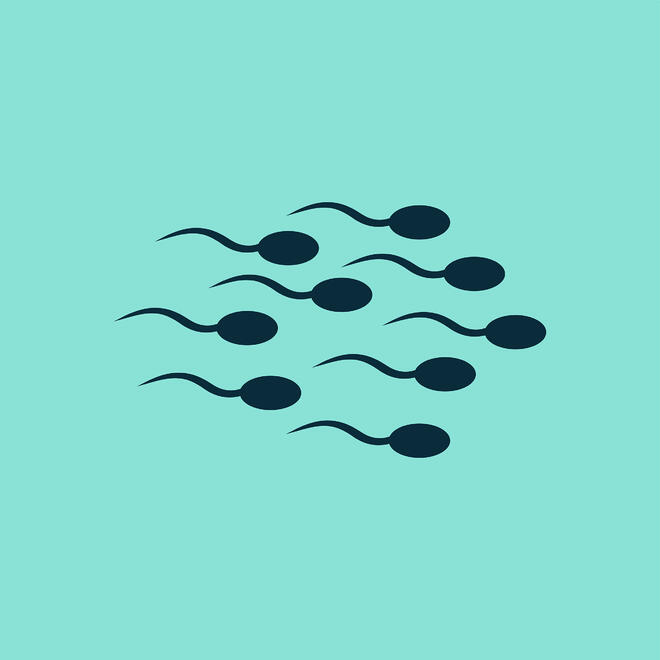 Low Sperm Count or Abnormal Semen Analysis? Now What?