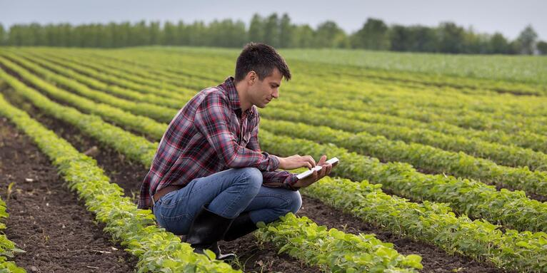 Rothamsted Opens Up Data to Tackle Global Agriculture Challenges