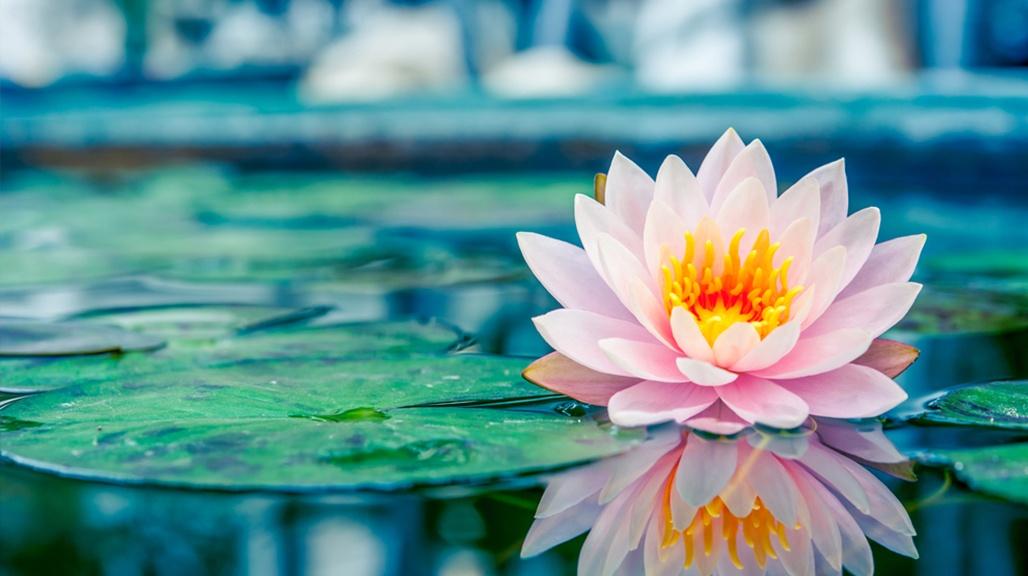 Joyful Meditation - Om Shanti Peace Chants (Video)