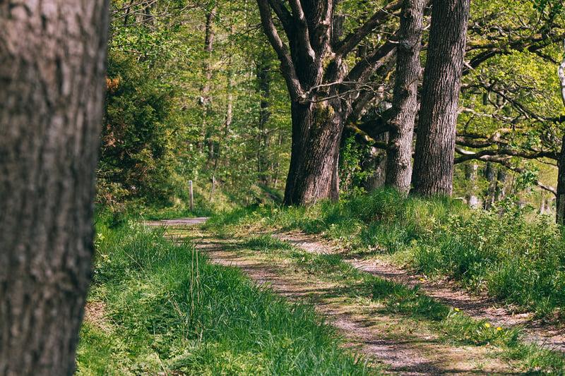 skog-vår