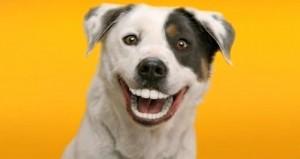 Koirien Tekohampaat