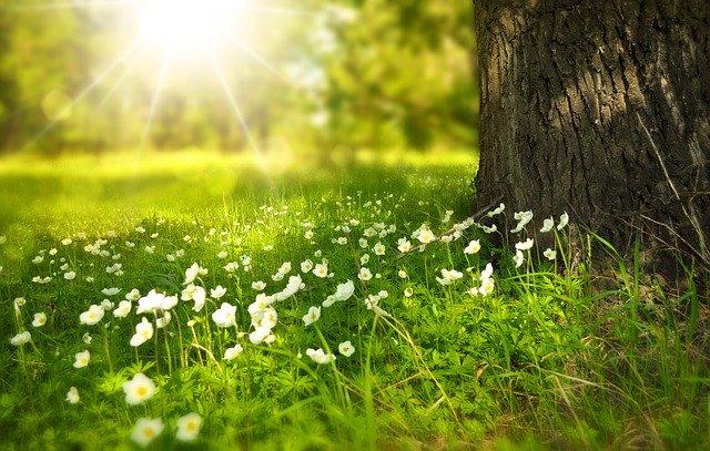 spring_spring flowers_pixabay