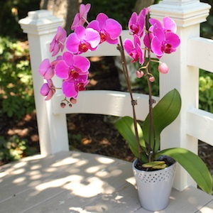 summer-orchid-care-2.jpg
