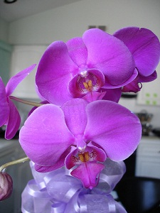 Why Are Easter Orchids Purple And White