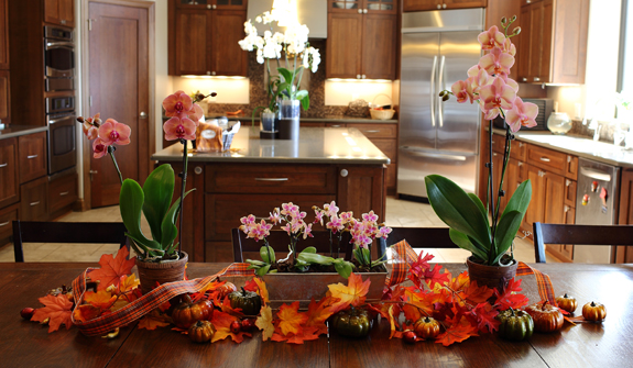 DIY Thanksgiving Centerpieces | Orchid Centerpiece Ideas