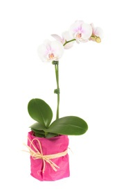 mothers-day_gift_orchid.jpg