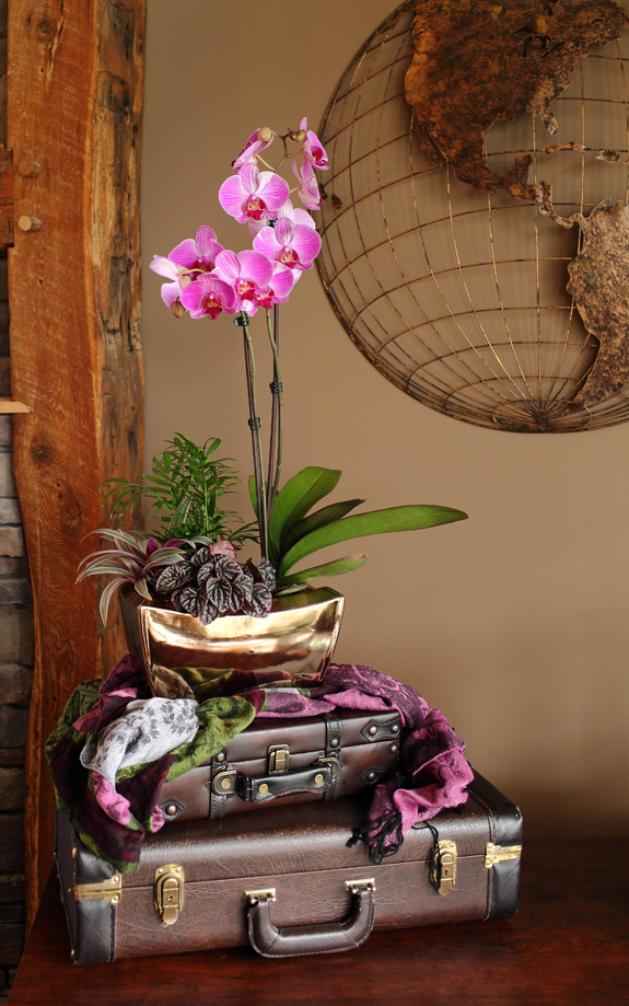 Purple Striped Orchid Garden