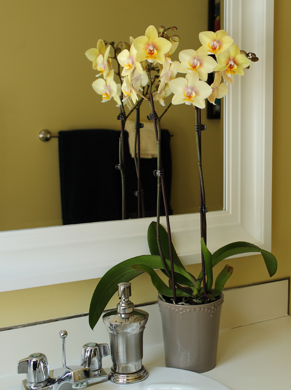 Cheery Yellow Orchid Matches Bathroom Decor