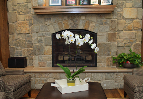 Tall-White-Orchid-on-Ottoman-in-front-of-Fireplace