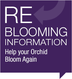 Reblooming Information
