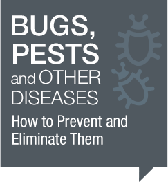 Bugs, Pests and other diseases