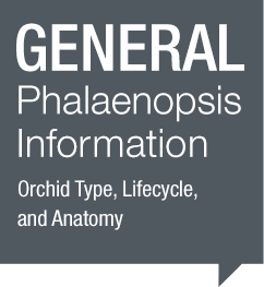 General Phalaenopsis Information
