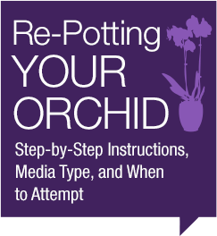 Re-potting your orchid