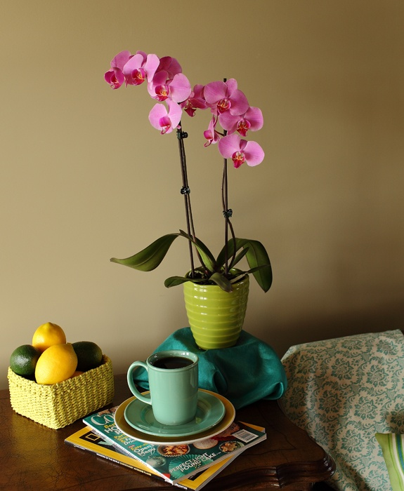 5-easy-ways-to-prevent-orchid-diseases