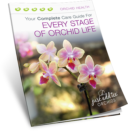 Every Stage of Orchid Life