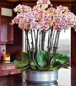 easy-orchid-care.jpg