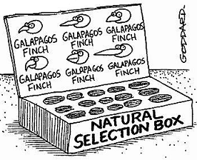 Who was Charles Darwin and what was his theory of natural selection?