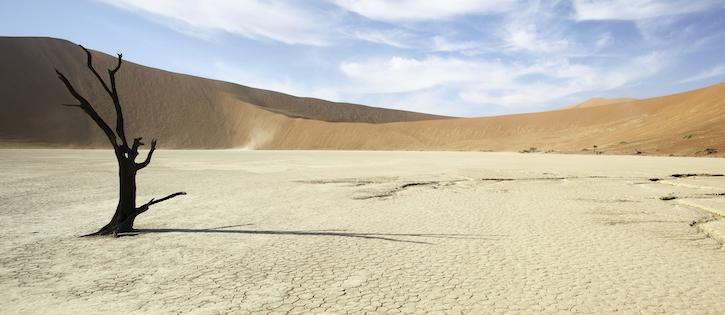 dead_tree_in_desert