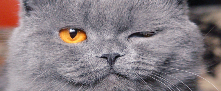 catwink