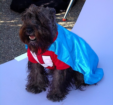 underdog - dog in a shirt and cape